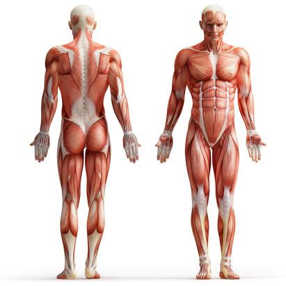 Faltblatt für Physiotherapie