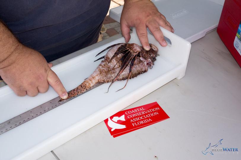 invasivefishharvest3.jpg