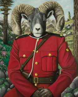 RCMP Bighorn Sheep