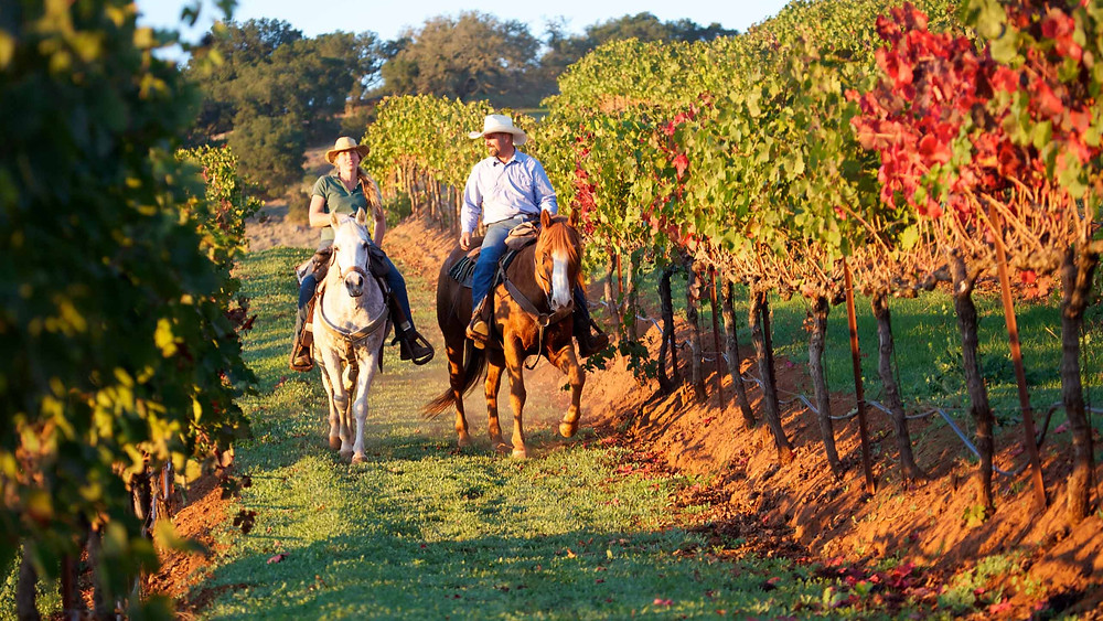 Wine and ride in Napa Valley