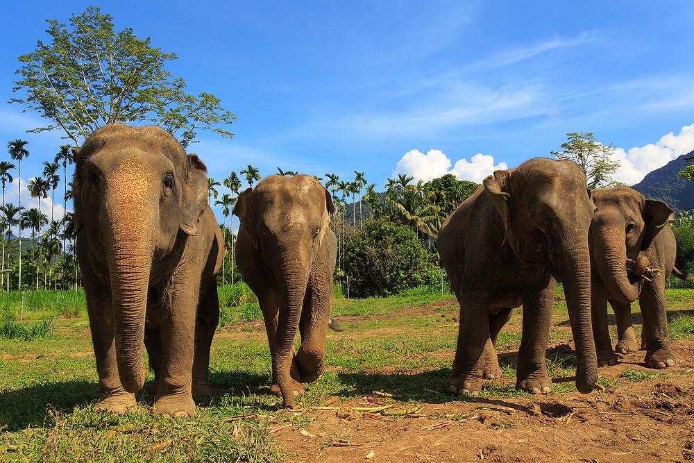 Seven days in Thailand