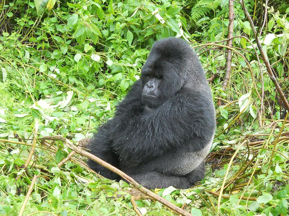 Gorillas, Masai & Beach, Rwanda
