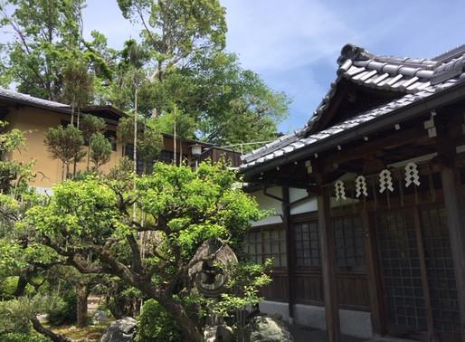 Client blog: A Japanese Adventure