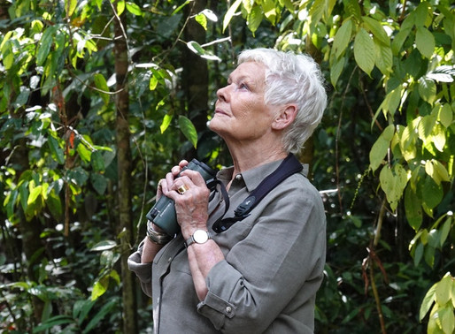 Wild in Borneo with Dame Judi Dench