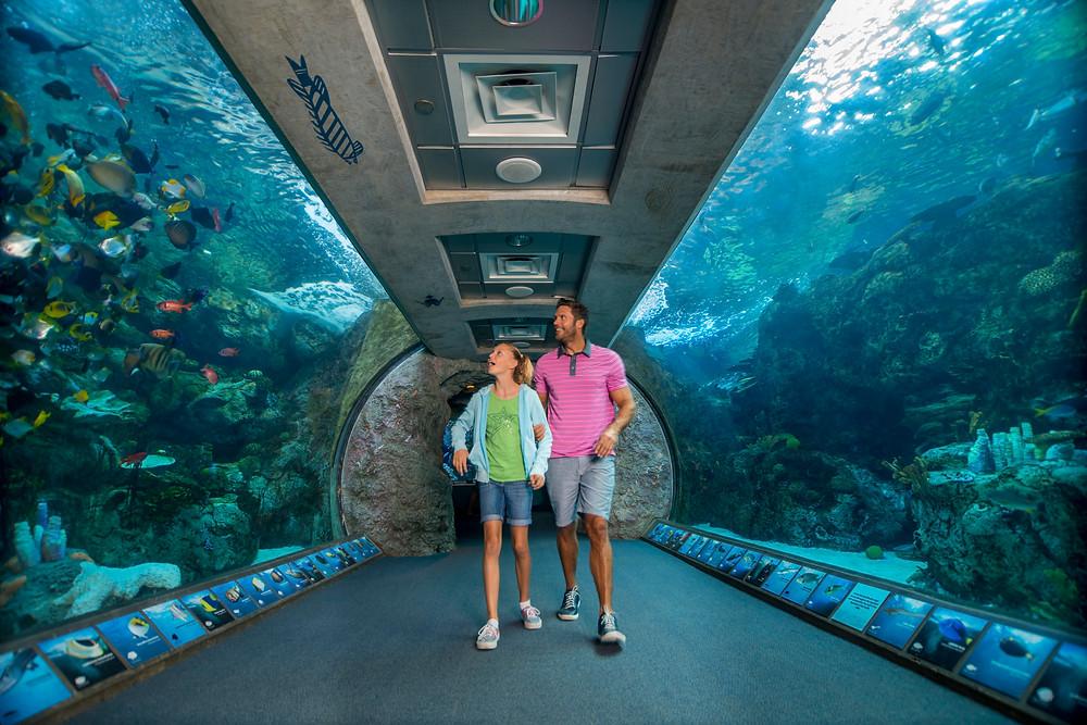 Enjoy a private aquarium tour