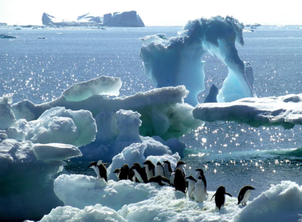 Antarctica Cruise with Hurtigruten
