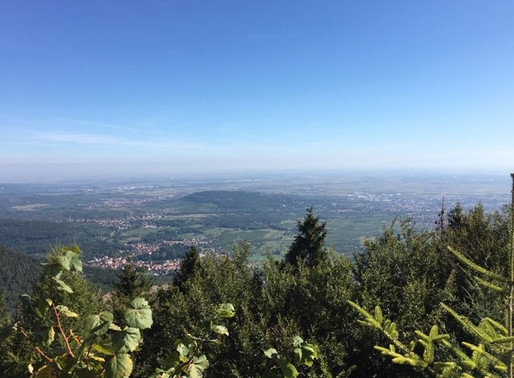 Client blog: The Gunns in Alsace