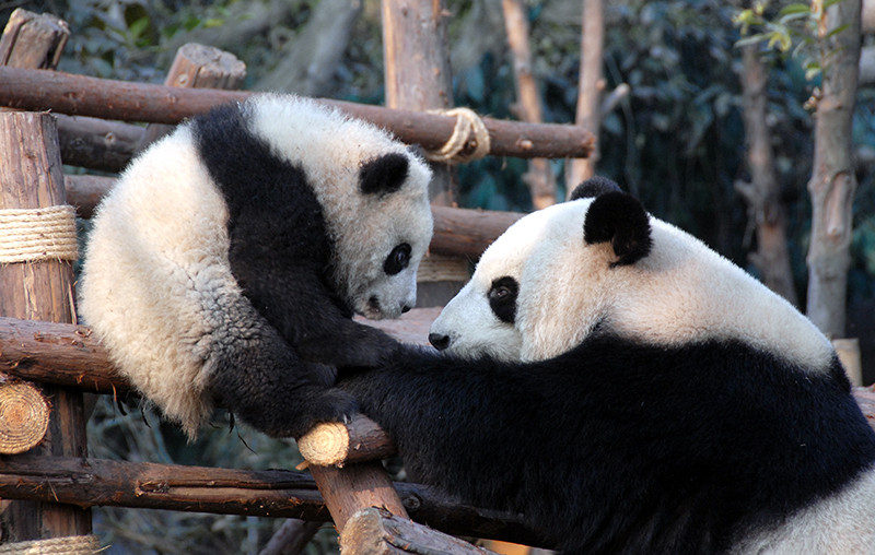 China and the John Craven Panda Experience