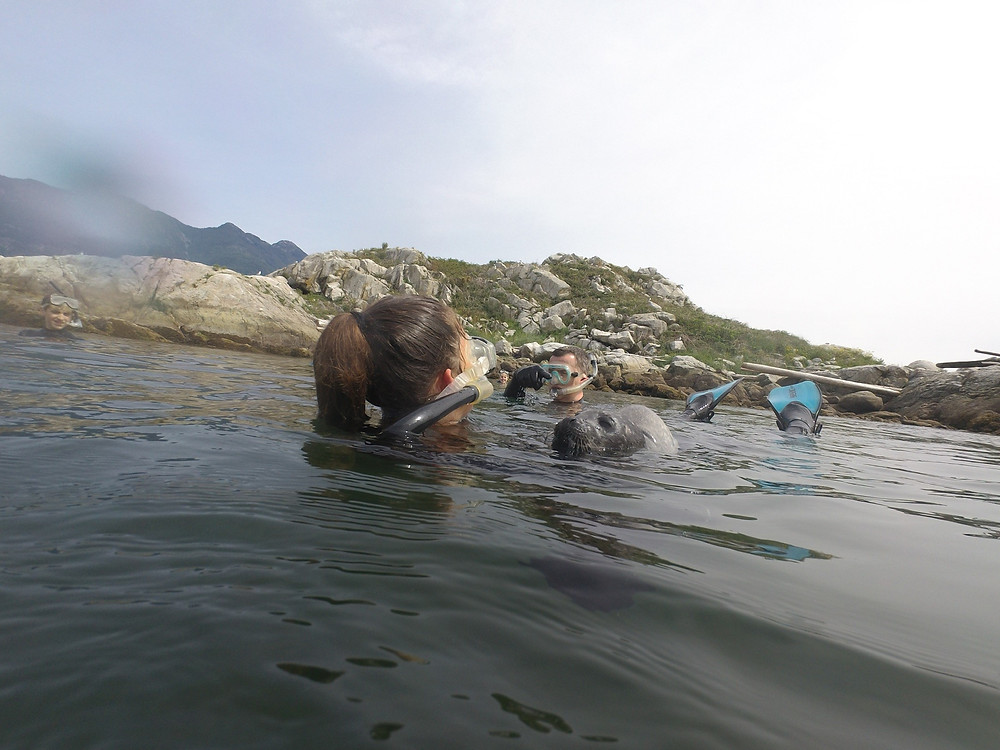 Swimming with seals in Canada