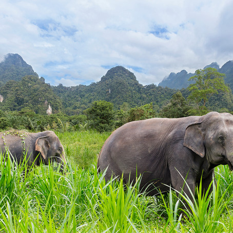 Featured Experience: Elephant Hills, Thailand