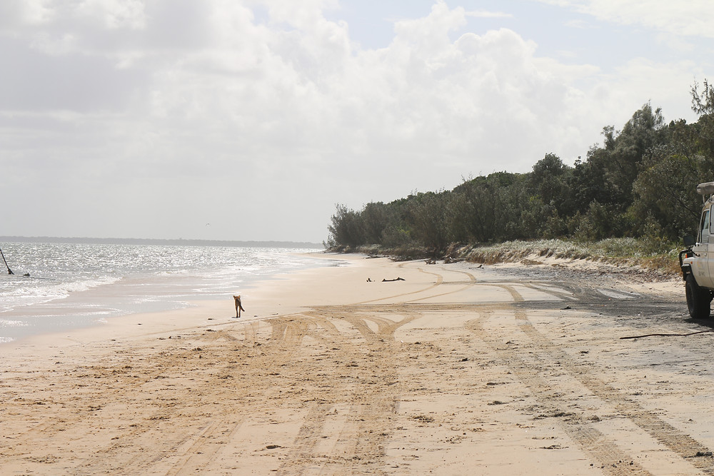 K'gari island (also known as Fraser Island)
