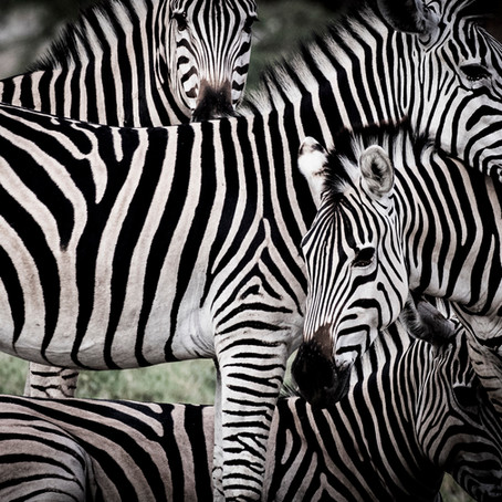 Featured Destination: Botswana