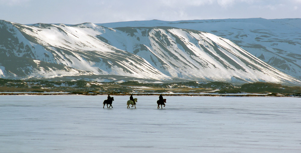 Horse ride on Lake Myvatn, Iceland