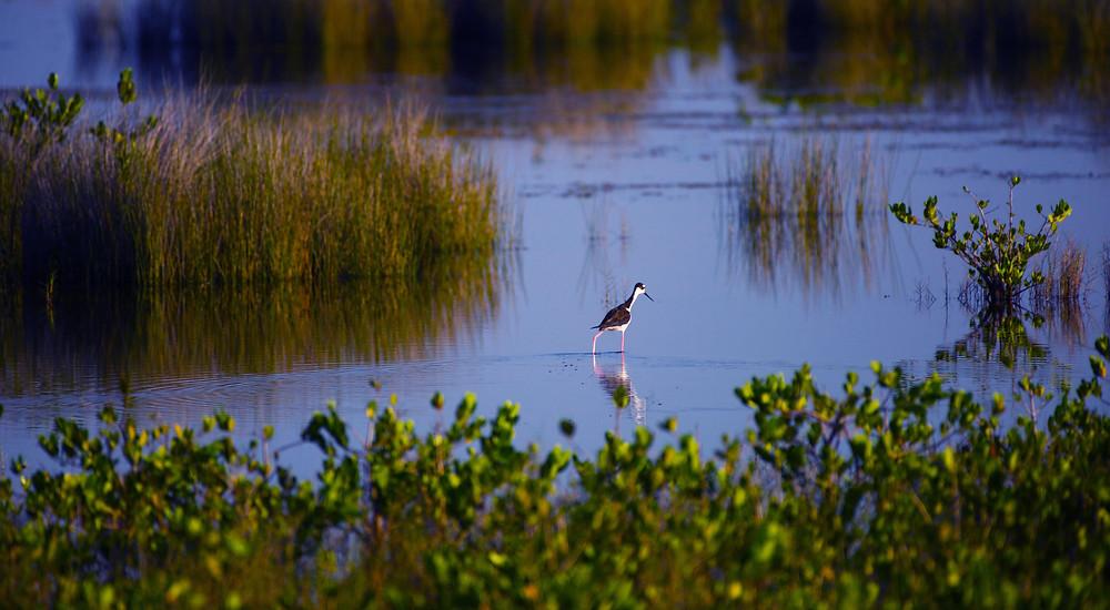 Merritt Island National Wildlife Refuge, Florida
