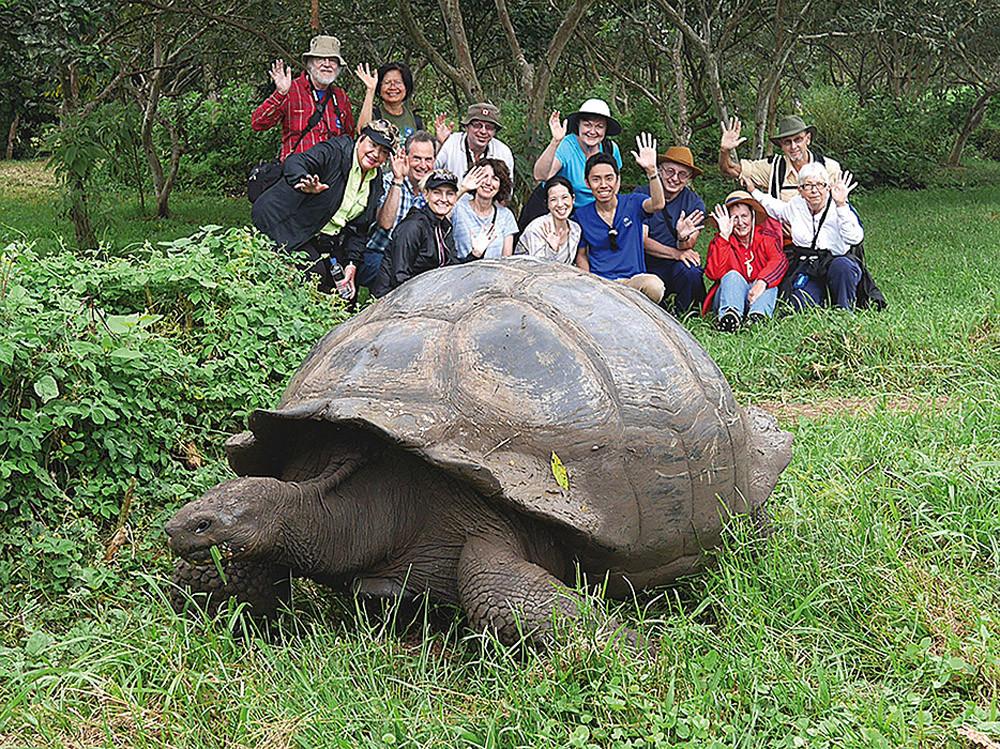 Galapagos Tortuga
