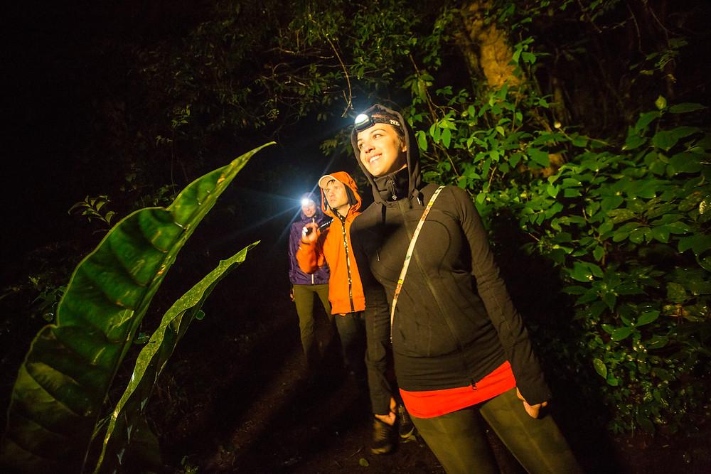 Costa Rica Monteverde Night Hike Rainforest