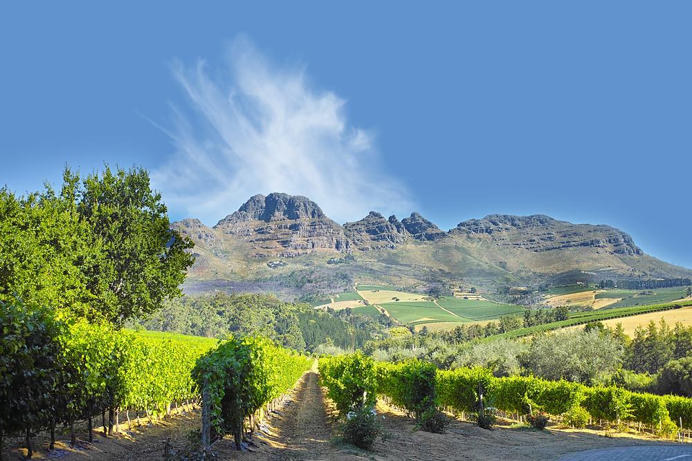 Winelands near Stellenbosch, South Africa