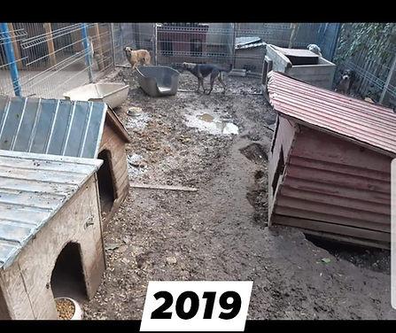 Azoria 2019.jpg