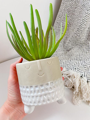 Face Planter with Succulent