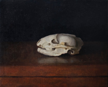 Badger Skull