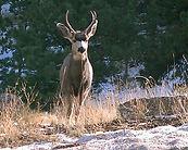 Pine Brook Hills Neighborhood Boulder Colorado