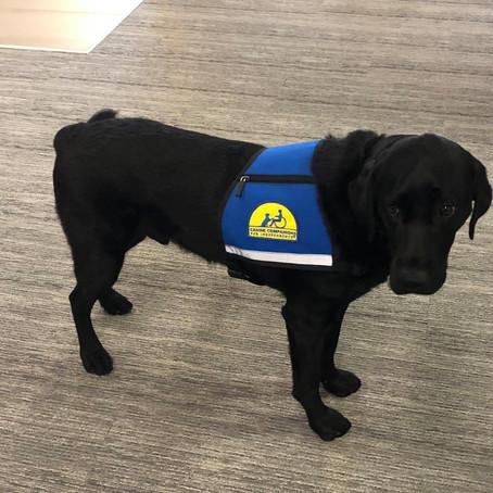 Dog Joins Boulder Justice Center Staff