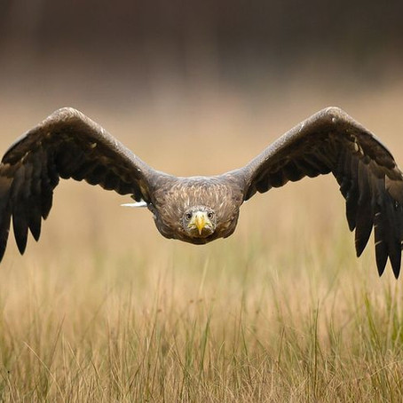 Nesting Eagles In Boulder Canyon