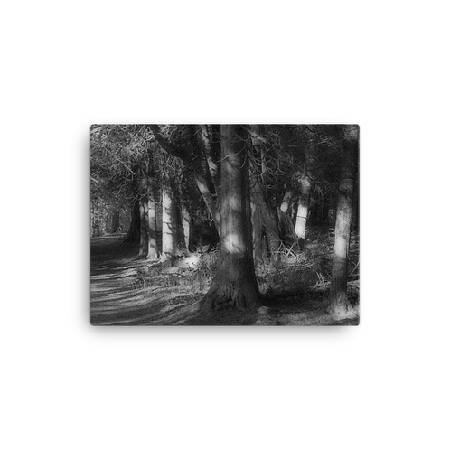 Wooded Path Canvas