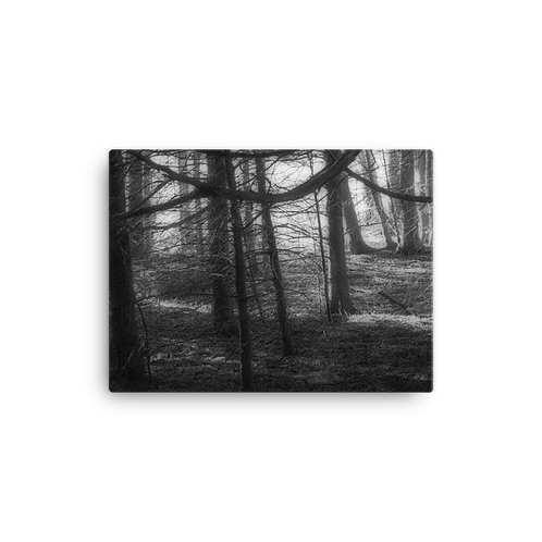 Toft Point Woodland 2 Canvas