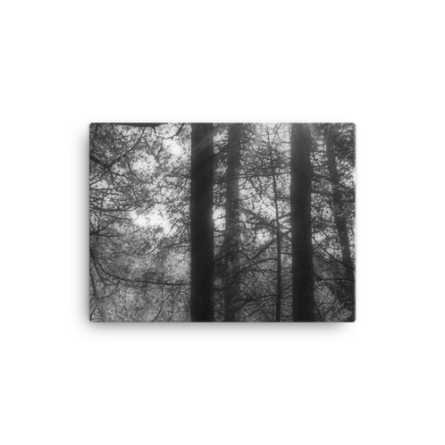 Toft Point Woodland 3 Canvas
