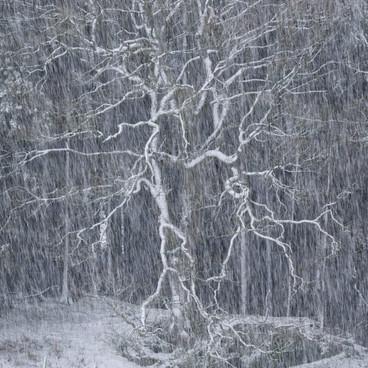 Winter's Reach
