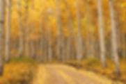 Last Dollar Road Colorado by Scott Wheeler Photography