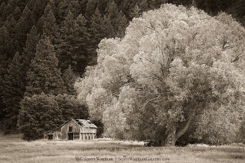 Barn under the Willow Tree