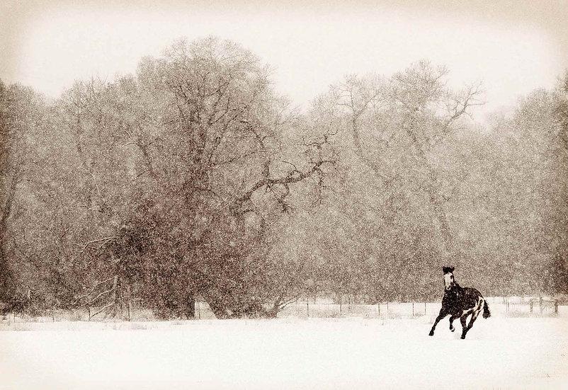 Horse winter cottonwood trees snow black and white photography scott wheeler