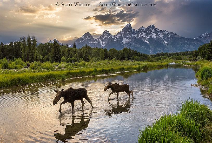 Scott Wheeler Photography Moose Pond Grand Teton Mountain