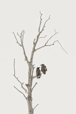 ravens in Winter Yellowstone by Scott Wheeler Photography