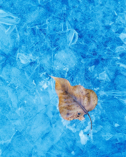 Leaf Ice Nature Photography by Scott Wheeler