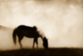 Horse profile photography by Scott Wheeler