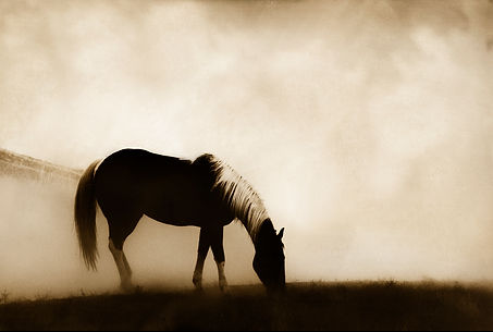 Horse profile photography by Scott Wheeler