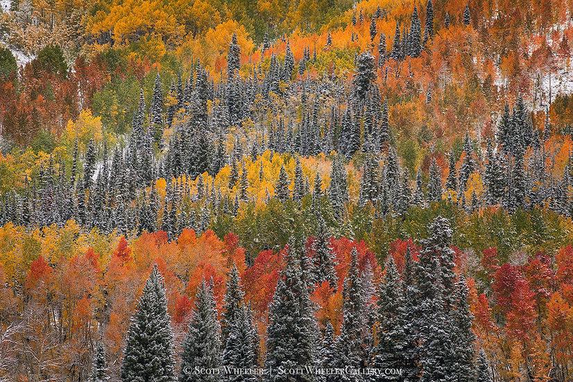 Scott Wheeler Photography Autumn Fall Aspen Forest Colorado
