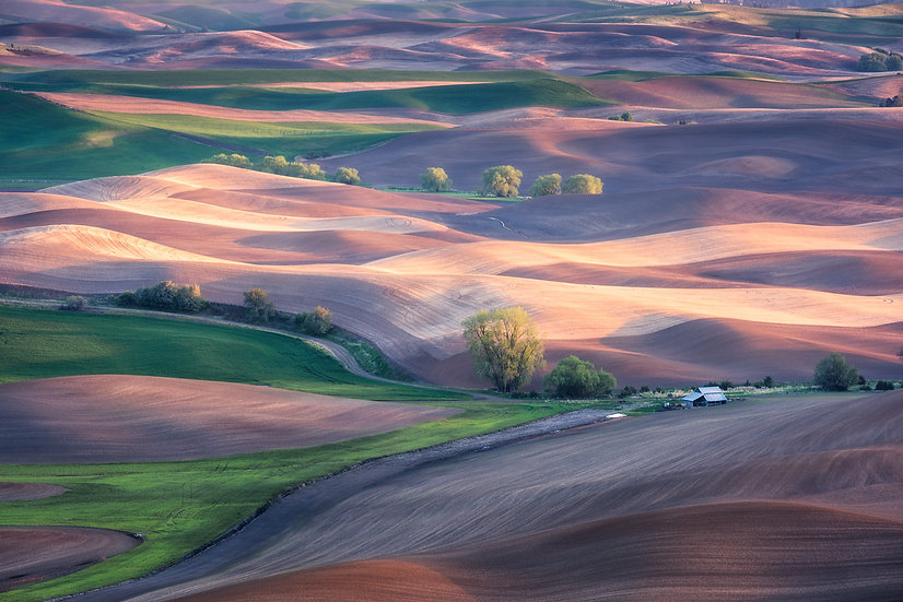 Light and Shadow on the Palouse Farmland