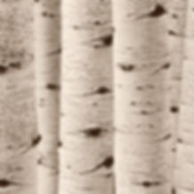 aspen tree trunks by Scott Wheeler Photography