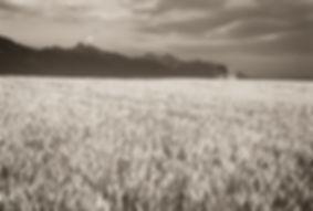 Rustic barn in wheat field photography by Scott Wheeler