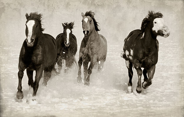 horses running in snow by Scott Wheeler Photography