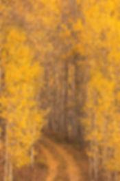 road through aspen by Scott Wheeler Photography