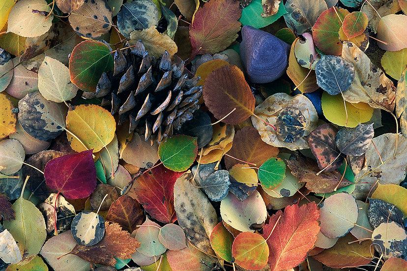Scott Wheeler Nature Photography Fall Autumn Leaves