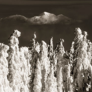 Snow Trees in Montana photography by Scott Wheeler