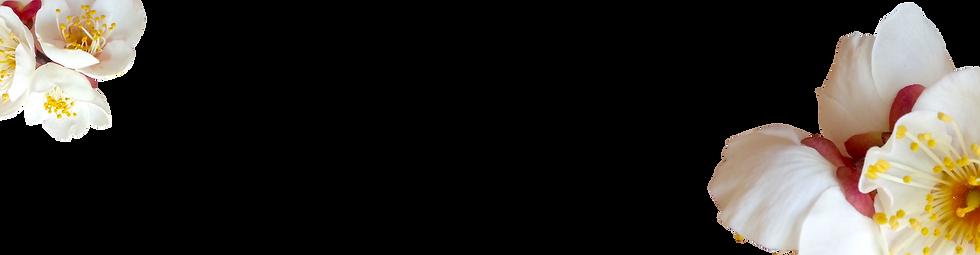 bg4.png