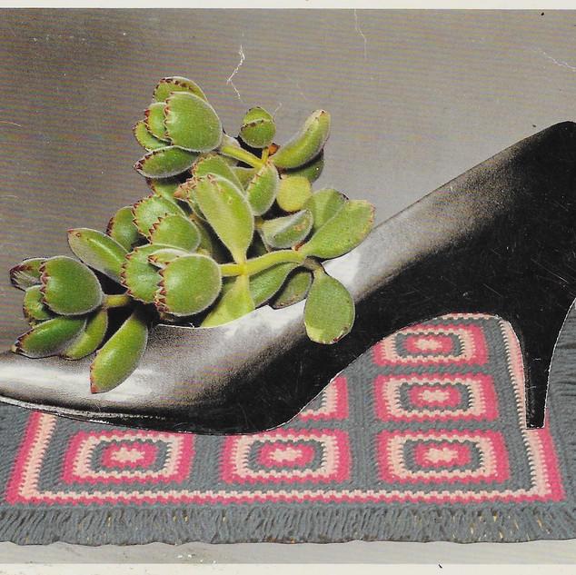 succulent in show