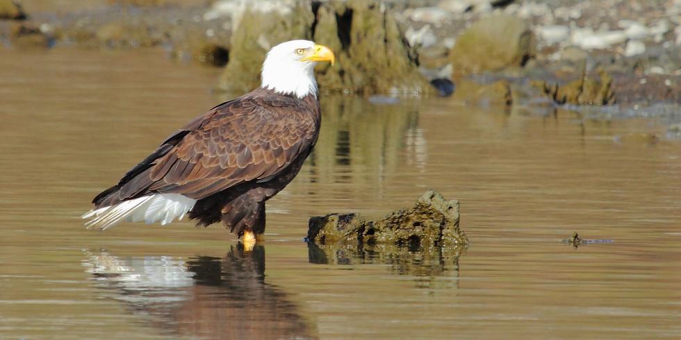 Lake Cachuma Naturalist Tour
